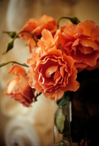 Dusty pink roses in a white room.