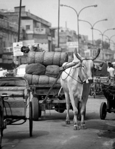 Ox and cart, New Delhi, India