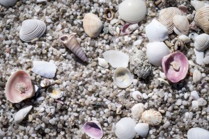 Shells and pebbles on a beach in Tasmania.