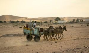 5 Donkey Cart, South-Western Namibia.