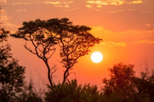 Sunrise behind an acacia tree on the border between Namibia and Angola.
