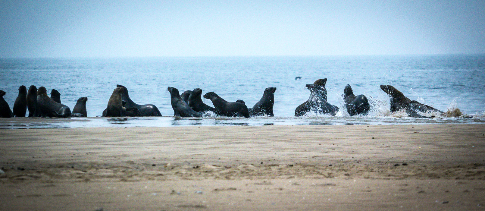 Seal colony. Walvis Bay, South-West Namibia